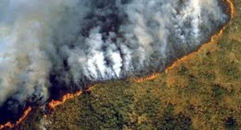 L' importanza della salvaguardia ambientale.