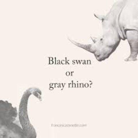 Cigno nero o rinoceronte grigio?